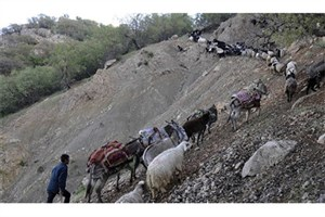 جادههای عشایری، مسیری برای دسترسی شکارچیان به زیستگاهها