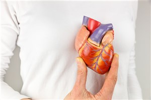 Scientists Develop Bionic Heart  Promises Better Cardiac Devices