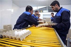 ایجاد 229 هزار شغل توسط  بنیاد برکت از طریق مشارکت اقتصادی
