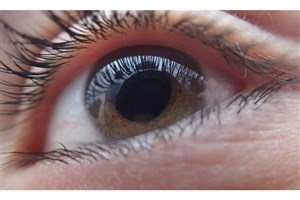 Scientists Discover New Protein Linked to AMD