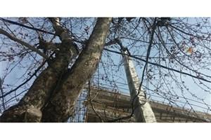 درختان مؤسسه دهخدا قطع نشده است