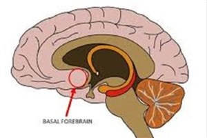 یافتن مکانیسم پشت پرده تشکیل اسکار در سیستم عصبی مرکزی
