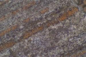 صمغی که عامل کشف  گنج 110 میلیون ساله شد