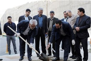 رئیس دانشگاه آزاد اسلامی یک اصله نهال غرس کرد