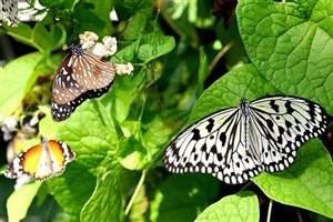 احداث باغ پروانهها در جنوب تهران/ کاشت نهالی علیه کرونا