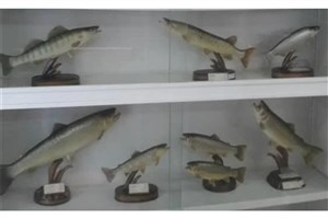پرورش ماهیان خاویاری در مرکز تحقیقات علوم شیلاتی واحد لاهیجان