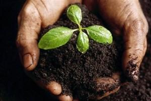 تولید سالانه یک میلیون لیتر کود بیولوژیک در کشور