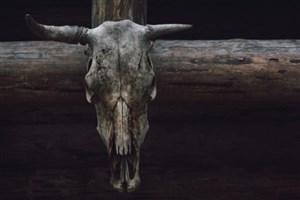 پنج روش شگفت آور استفاده از استخوان ها