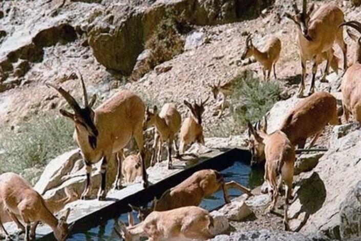 ممنوعیت  ورود به مناطق محیط زیستی استان تهران