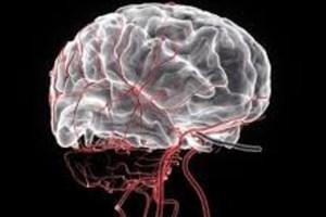 درک بهترساختار مغز فراهم شد