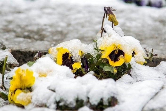 بارش برف بهاری