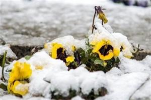 بارش برف و باران بهاری در جاده های 10 استان