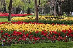 Festival of Tulip Flowers in Mashhad Mellat Park/ In Photos