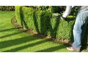 ارائه خدمات تخصصی برای نگهداشت فضای سبز