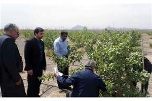 بازدید کارشناسان اداره جهاد کشاورزی از نهالستان دانشگاه آزاد اسلامی نائین