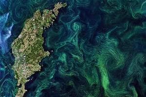 پیگیری رنگ اقیانوسها در مورد فیتوپلانکتونها