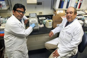 Investigators Discover Tiny RNA That Should Attack COVID-19 Diminish With Age, Disease