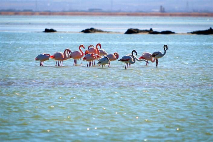 Zabol University Researchers Discover More than 10 New Species in Hamoun Int'l Wetland