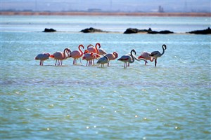 Zabol University Researchers Discover More than 10 New Species in Hamoun Int'l Wetland