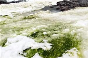 سبز شدن بخش هایی از قطب جنوب+عکس