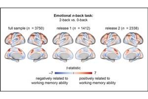 A Child's Unique Brain Activity Reveals Their Memory Ability