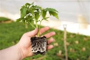 تولید سالانه 50 تن  کود زیستی همسو با شرایط اقلیمی کشور