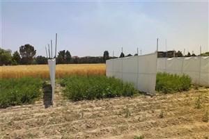 تولید بذر هیبریدی چغندر لبویی و علوفهای در دانشگاه آزاد اسلامی کرج