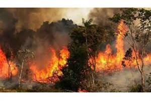 آتشسوزی در جنگلهای گچساران ادامه دارد